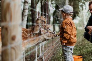 djurpark